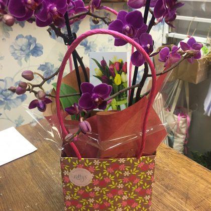 Lottys Flowers Faversham - News